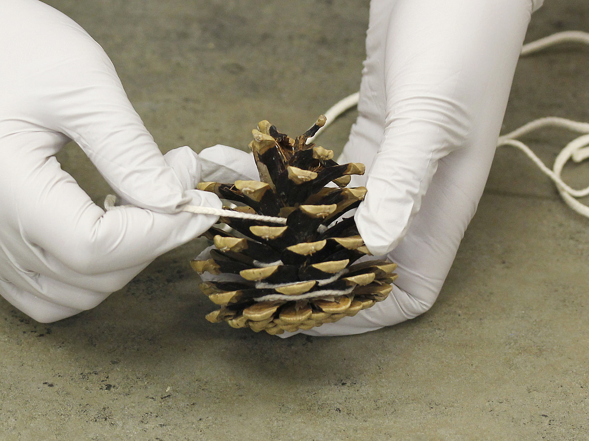 pine cone firestarters candle making techniques